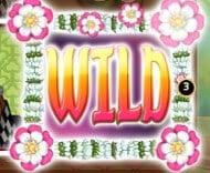 wild symboli pelissä